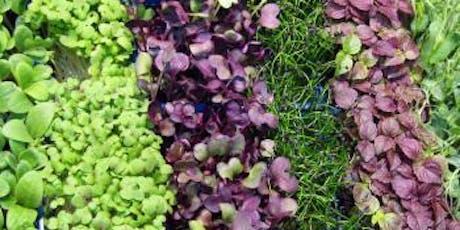 Year-Round Indoor Salad Gardening - Morning Session, Nov. 16 tickets