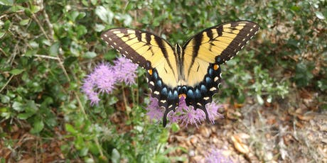 Butterflies of Brooker Guided Hike tickets