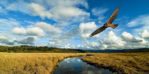 Bird Walk with Ken