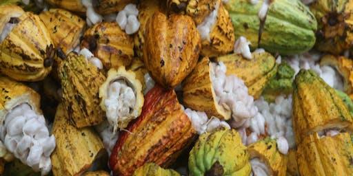 CTAHR Cacao Workshop - Kauai