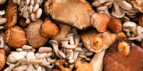 MUSHROOMS FOR IMMUNE RESPONSE tickets