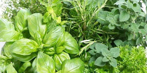 Herban Medicine