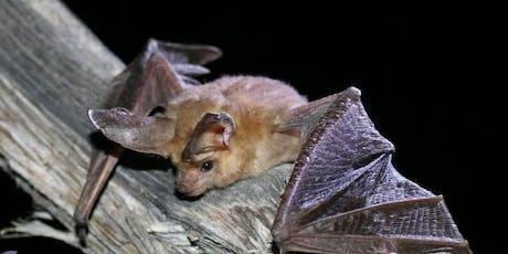 NorCal Bats tickets