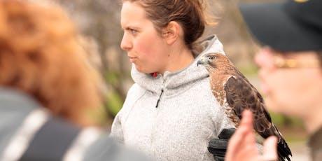 Trésors naturels du parc La Fontaine : oiseaux de proie billets