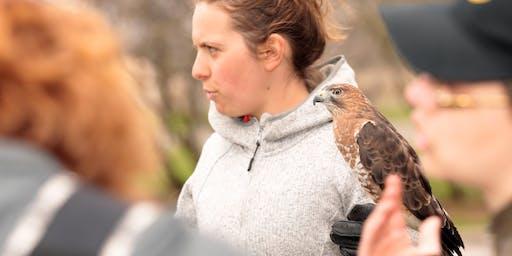 Trésors naturels du parc La Fontaine : oiseaux de proie