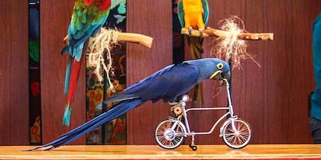 Happy Birds End of Summer Show tickets