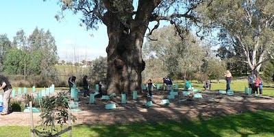 Community Planting morning in Yarralumla Drive parklands