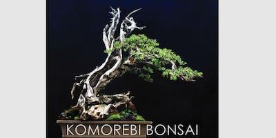 KOMOREBI BONSAI 2019