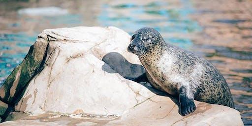 YOGA at Seal Harbour