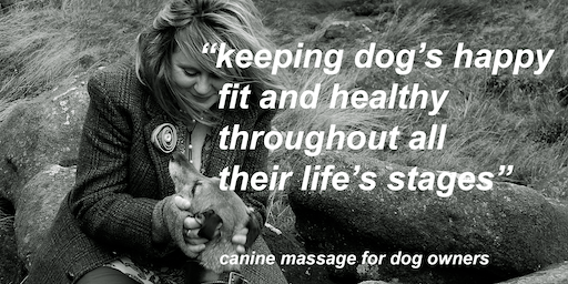 An introduction to canine massage for dog owners 14th July 2019