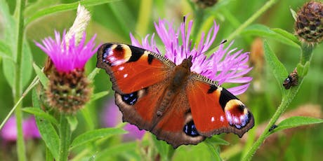 Afternoon Butterfly Walk in the Heart of England Forest tickets