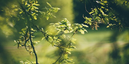 Get to Know Your Trees Course / Cwrs Adnabod Eich Coed