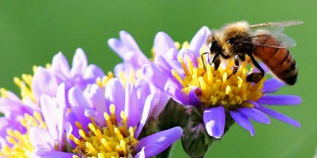 Pollinator Week Nest-Building at The Battery tickets