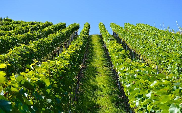 Canterbury Wine Festival™ showcasing award-winning Kent wines image