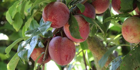 Summer Fruit Tree Pruning tickets