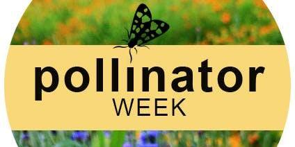 Pollinator Weekend Garden Walk Thru