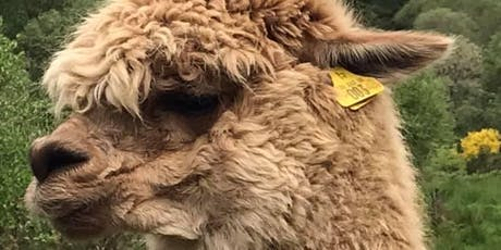 Alpaca Farm & Swansea Yarn ROAD TRIP tickets