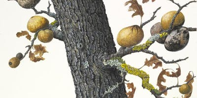 Painting Oak Branches and Galls in Gouache Workshop with Lucy Martin
