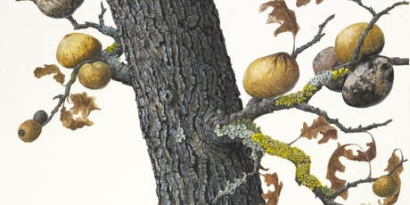 Painting Oak Branches and Galls in Gouache Workshop with Lucy Martin tickets