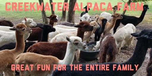 Creekwater Alpaca Farm Barn Tours