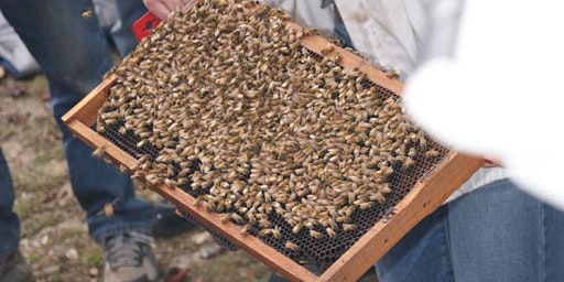 Beekeeping in the Panhandle 8th Annual Workshop, Field Day and Trade Show