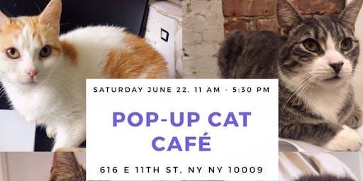 Pop-Up Cat Café