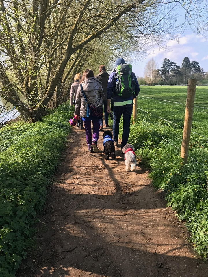 Natural Netwalking in Bix, Oxfordshire. 23rd August 9.30am - 11.30am image