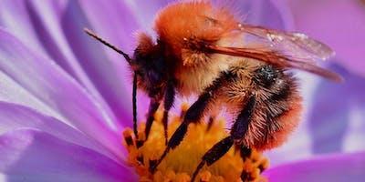 Bee-Keeping Talk