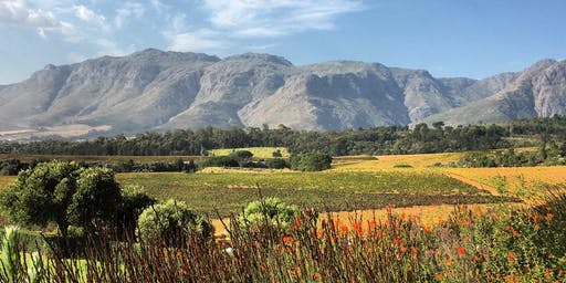 Drink your way through South Africa (wine tasting)