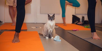 Kitten Yoga to Benefit Cat Connection