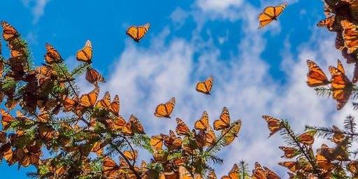 Tour Santuario de la Mariposa Monarca