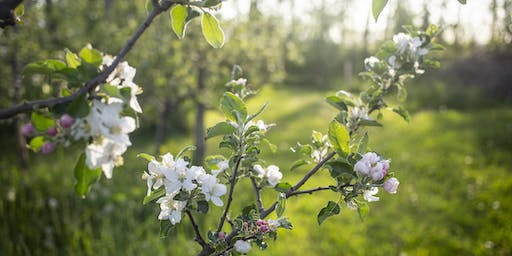 Redbyrd's Summer Orchard Tour: Walk the Orchard, Taste the Cider