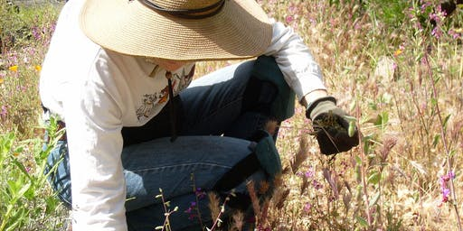 Native Plant Garden Maintenance with Lili Singer