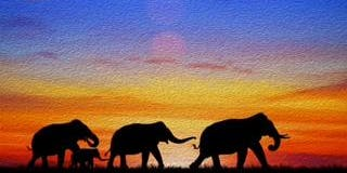 Elephant Sunset Paint & Sip @ Club Northwest