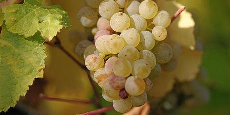 Wine Tasting - Grape Expectations: Chenin Blanc, Chardonnay and Riesling tickets