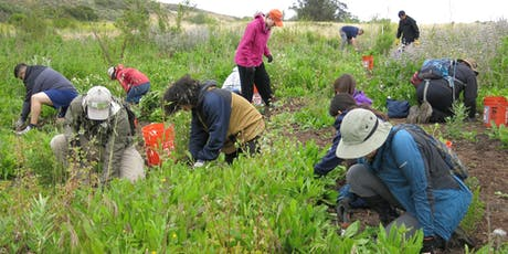 Volunteer Opportunity at Yerba Mansa Meadow tickets