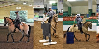 Working Equitation Obstacle training