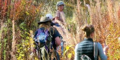 Medicinal Plant Walks tickets