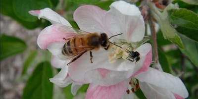 SYDNEY SCIENCE FESTIVAL | Infectious Disease Threats to Honeybees
