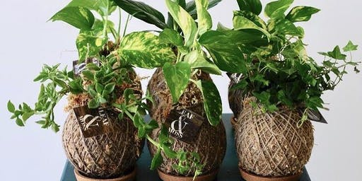#013 Kokedama Workshop - Karratha