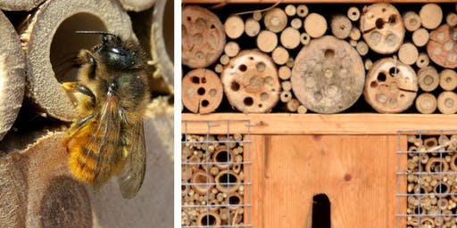 Bee Our Guest: a bug hotel workshop