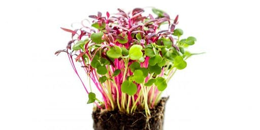 Everything you need to know about Microgreens #60minutes