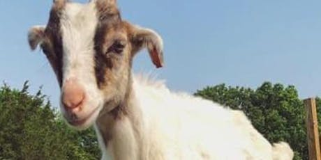 Goat Yoga at Sugar Sweet Farms tickets