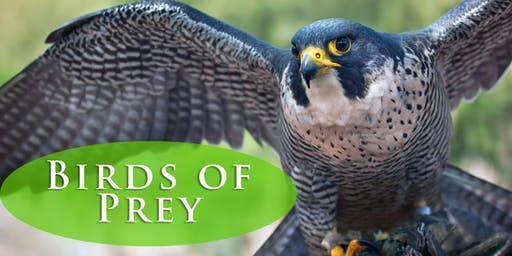 Canadian Raptors Conservancy - Birds of Prey