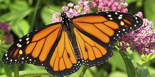 Education Series: Perennials for Pollinators and Butterfly Release - Dunlap, IL