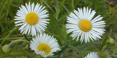 Wildflower Wednesday tickets