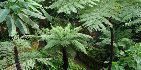 Tropical Ravine and Palm House- Botanic Gardens Belfast tickets