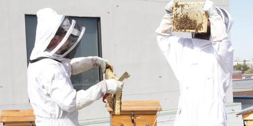 Urban Beekeeping Tours Summer 2019