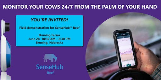 Field demonstration for SenseHub™ Beef