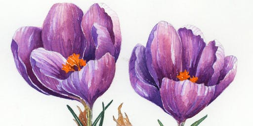 The Basics of Watercolor One-Day Workshop
